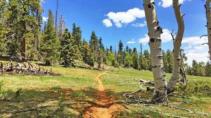 Mountain Biking Virgin River Rim Trail