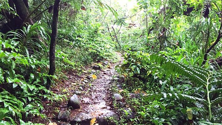 Col des 3 Pinus Hiking Trail on Moorea